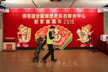 雷吳偉儀女士及華哥的指揮下,『笨豬』作出不同難度的表演及舞蹈等,把活動氣氛一再推上高潮。    攝影:李誠翰
